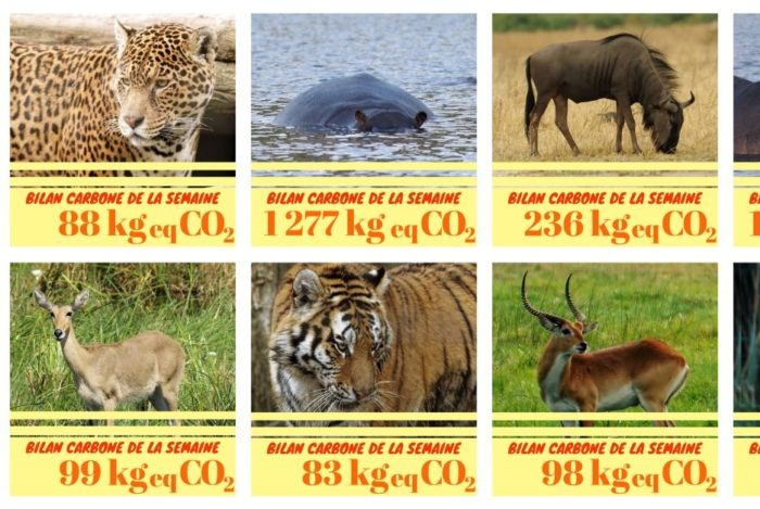 mosaique_de_bilan_carbone